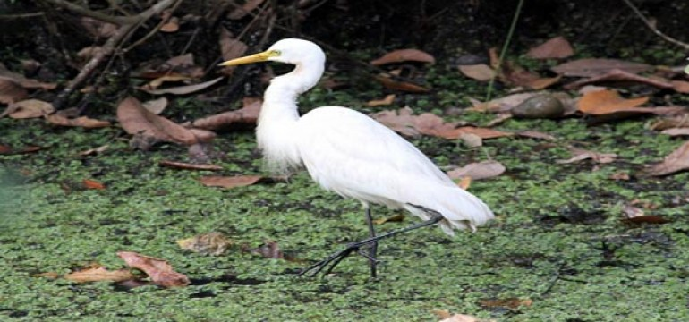 Kumarakom Bird Sanctuary
