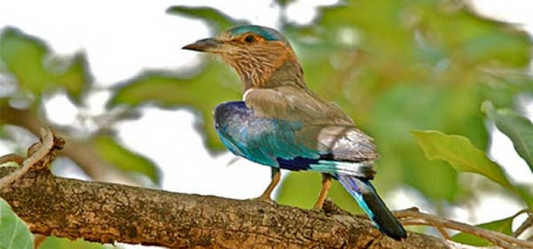 Mayani Bird Sanctuary