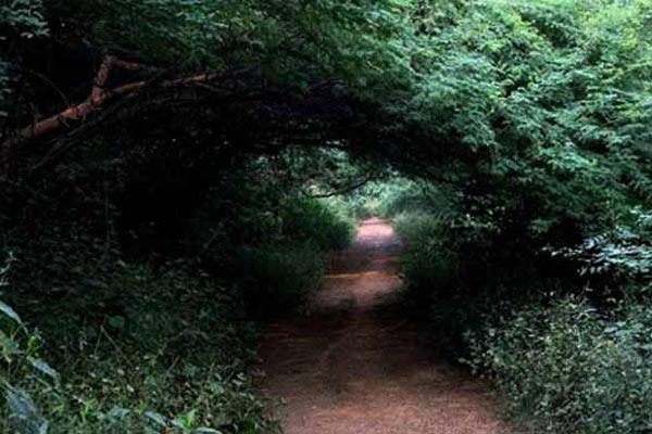 Sanjay Van haunted Place in Delhi