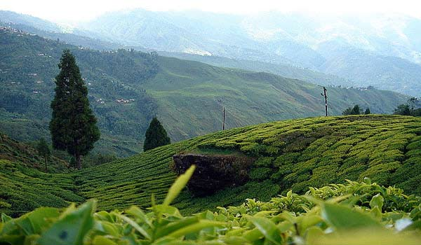 Famous Tourist Places in Darjeeling