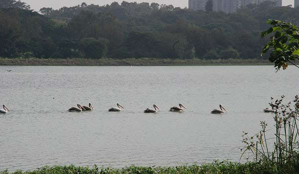Hebbal Lake in Bangalore