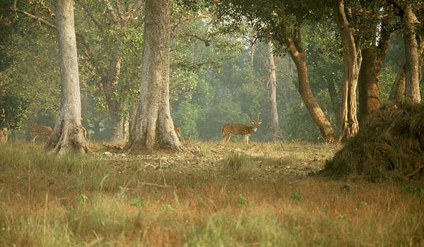 Kanha National Park in  Madhya Pradesh