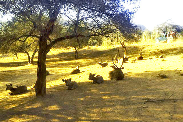 Sariska National Park In Alwar