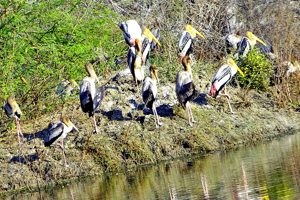 Keoladeo Ghana Bird Sanctuary