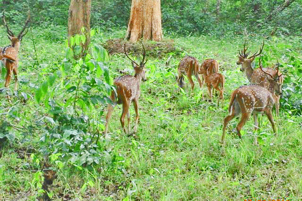 Nagarhole Park in Coorg