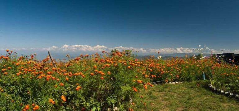 Mukteshwar Travel Guide