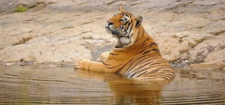 Famous Tiger Reserves in India