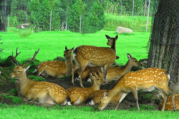 Top Wildlife Sanctuary in Gangtok